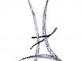 Calligraphiques11.